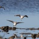 Le retour des migrateurs du Nord, la migration post-nuptiale