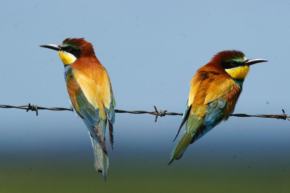 les oiseaux au printemps t parc ornithologique du pont. Black Bedroom Furniture Sets. Home Design Ideas