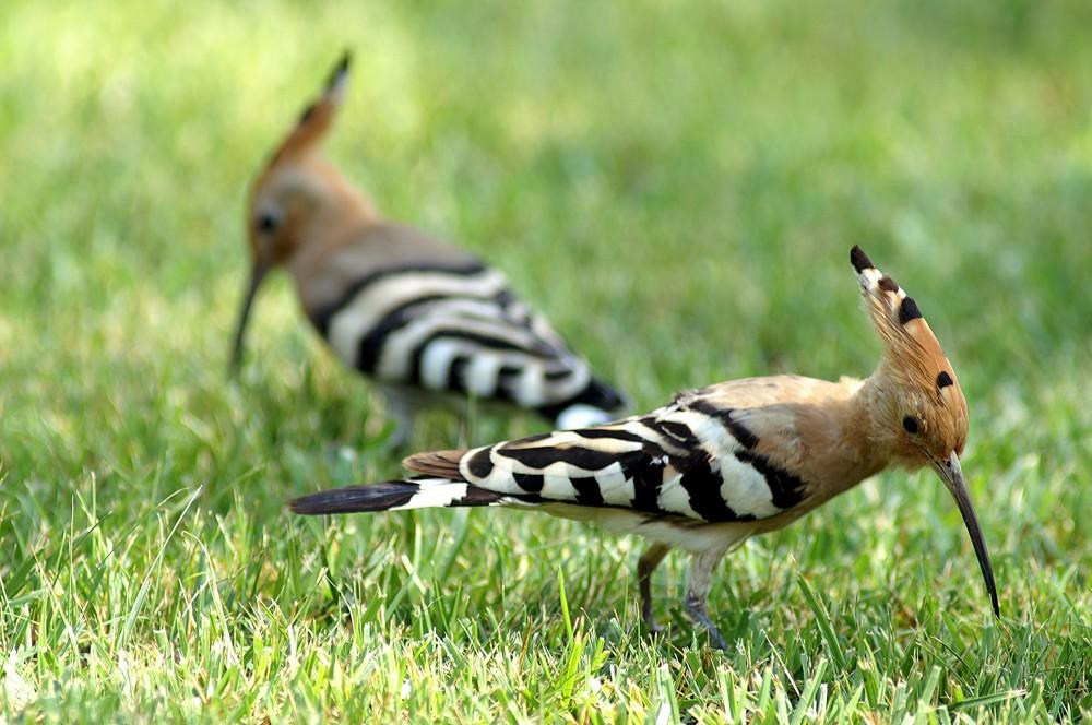 Les oiseaux au printemps t parc ornithologique du pont de gau - Taille du pecher au printemps ...